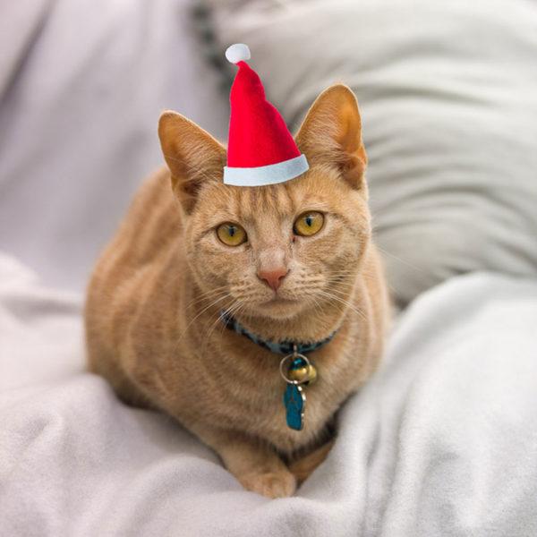 af20181119 cat 216p